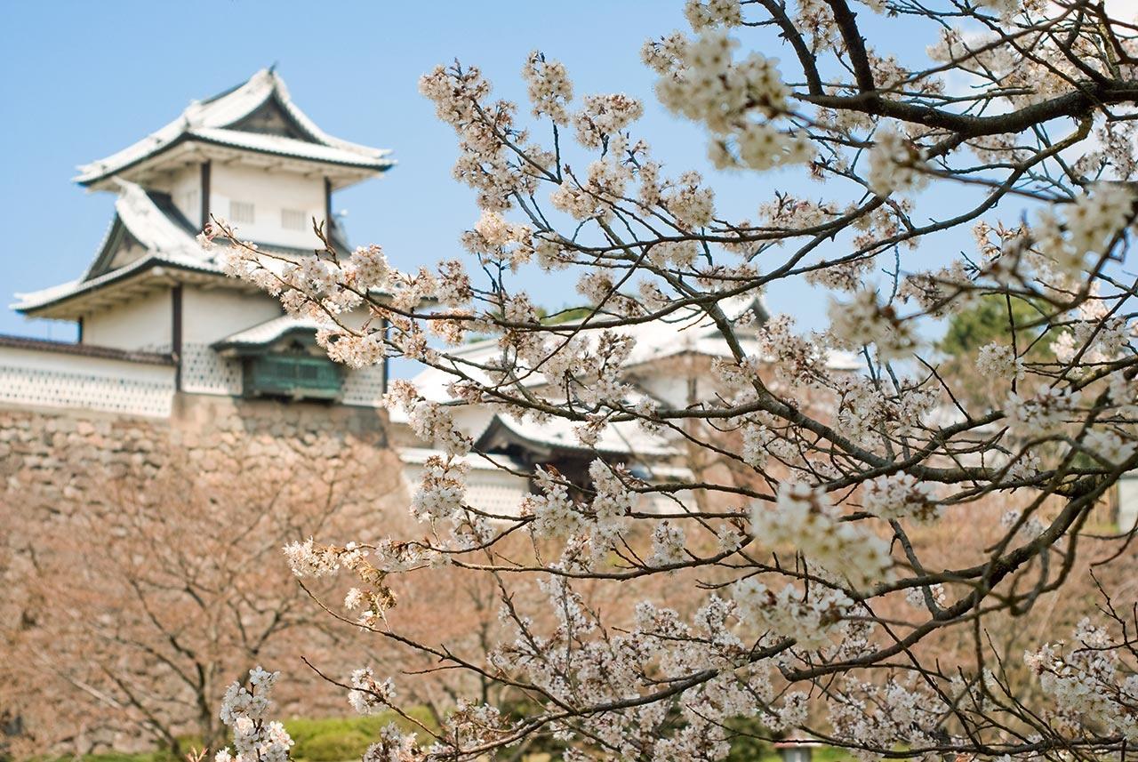 桜満開♪ 金沢の坂道散策 写真集 2015