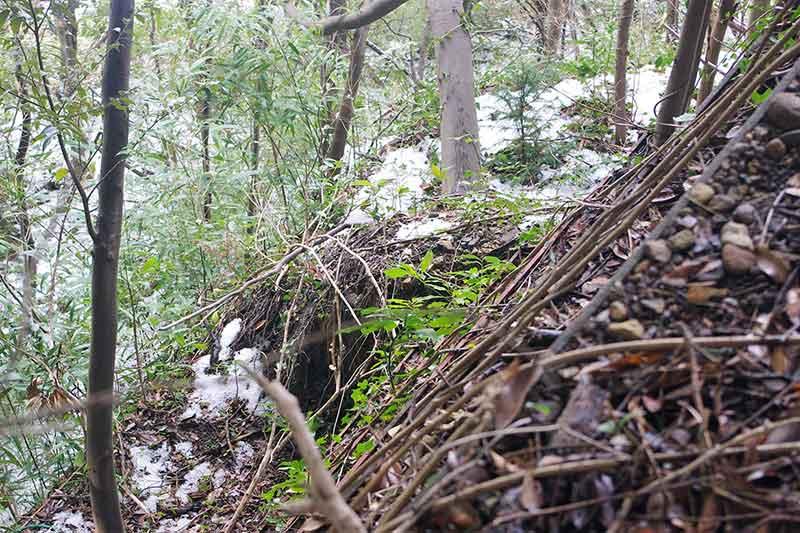 崖地の通勤路 ― 本多の杜の「家臣坂」