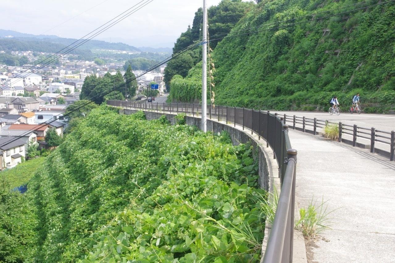 野坂は右上の緑の中に隠れている。左奥に見えるのは戸室山=2015.8.12旭坂で