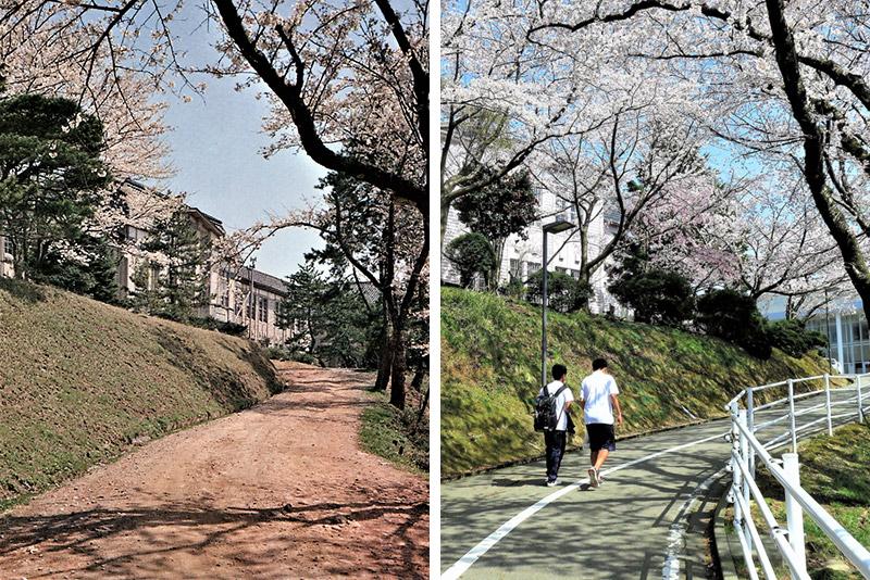 """""""サクラのトンネル""""は遅刻坂 - 金沢桜丘高校の児安坂"""
