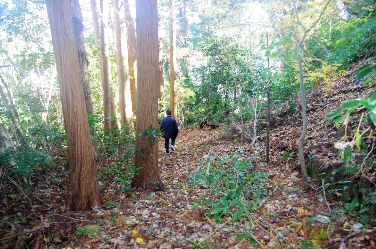 山中を思わせる野坂。樹間から外光が射し込んでハレーションを起こした